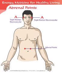 Puntos Adrenales en Medicina Energetica